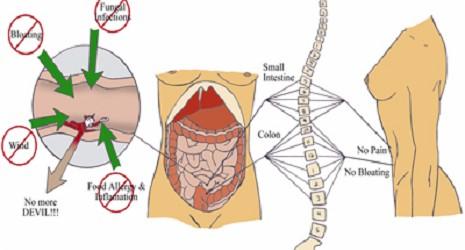 hvad gør proteinpulver ved kroppen